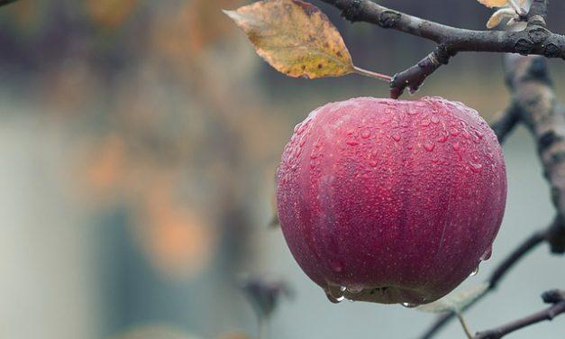 Przechowywanie jabłek – najlepszy sposób